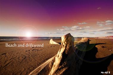 Beach and driftwood.jpg